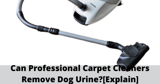 can professional carpet cleaners remove dog urine